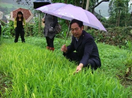 碧波乡加强科技指导坚决打好农作物病虫害防治硬仗