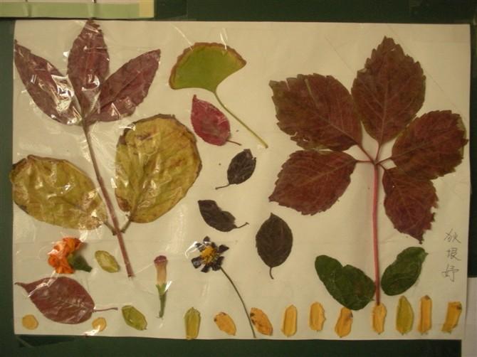 制作了美丽的树叶拼贴画图片
